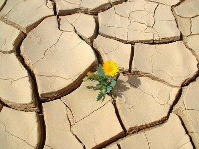 reverdecer-desierto-sueno-milenario-biologa-china-hecho-realidad_4_2050658