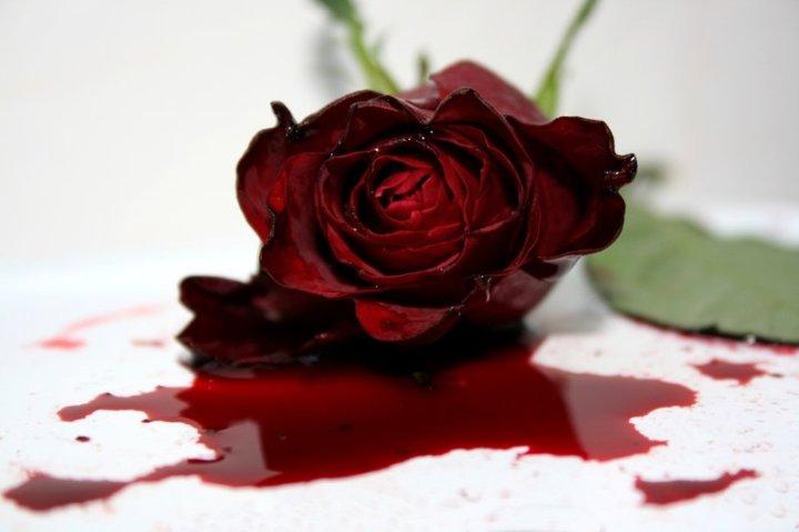 sangre_de_rosa_by_circulo_artistico