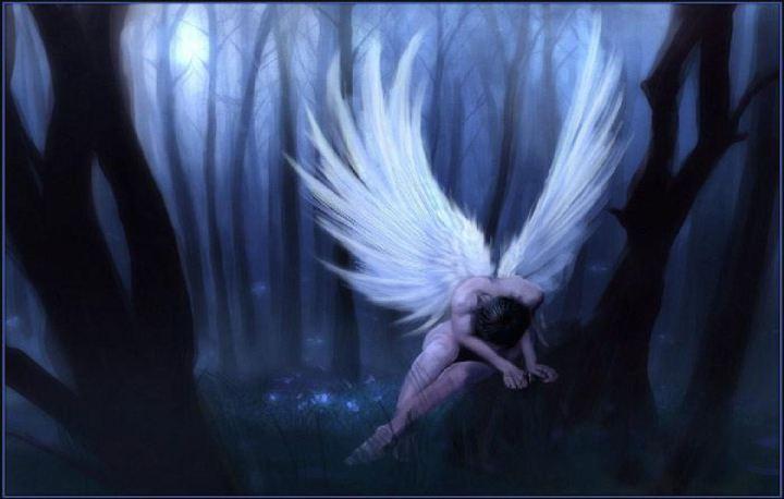 angels-dark-thick-forest-31000
