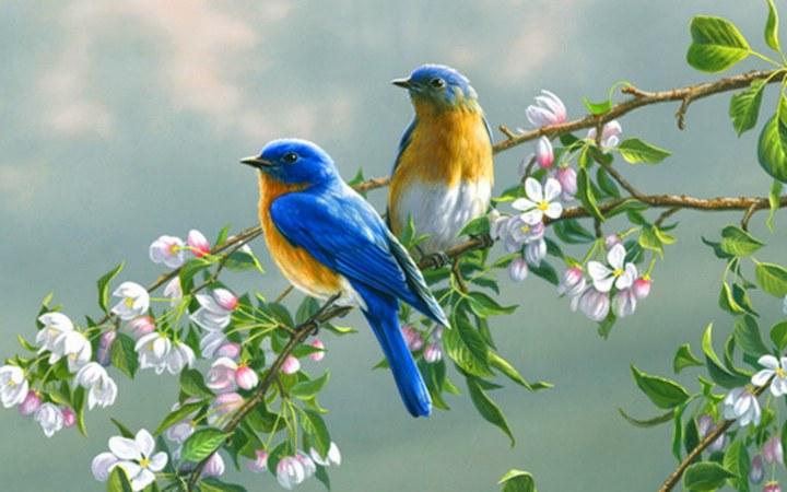 pareja-de-pajaros-tricolor