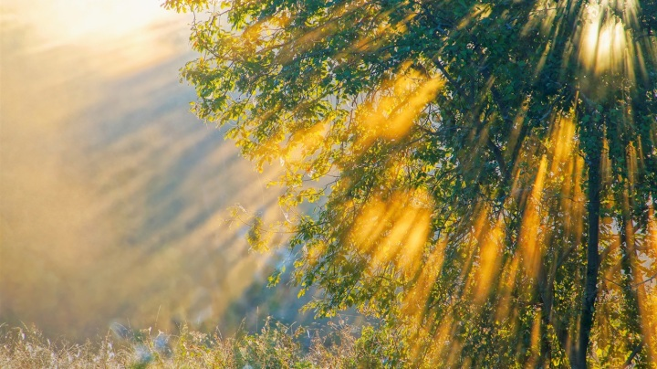 the-sunshine-of-the-morning-nature-trees_1366x768