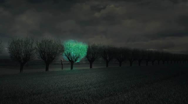 arboles-bioluminiscentes