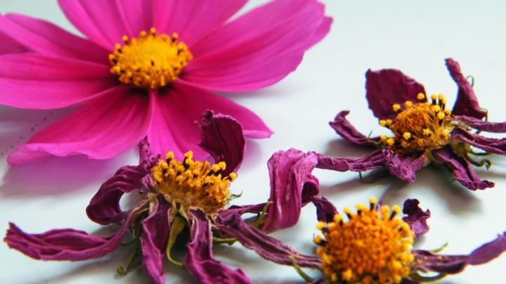 flores-secas-bonitas