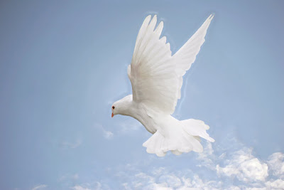 flying-dove
