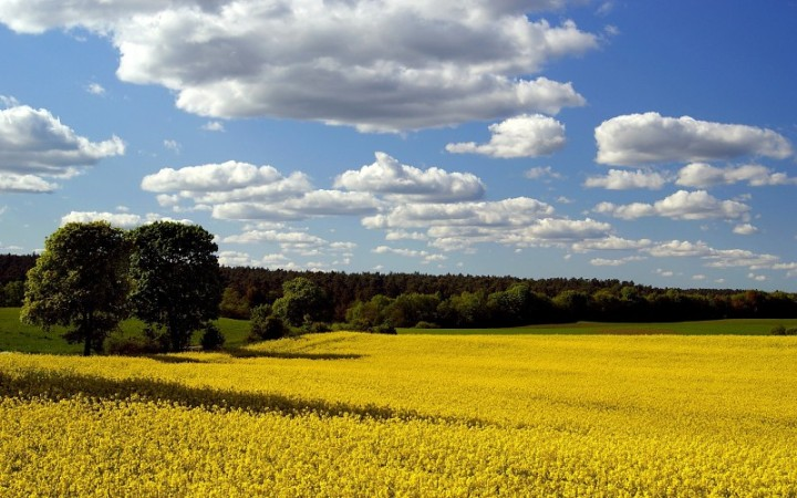 clouds-landscapes-fields-blue-skies-1920x1200-wallpaper-577809