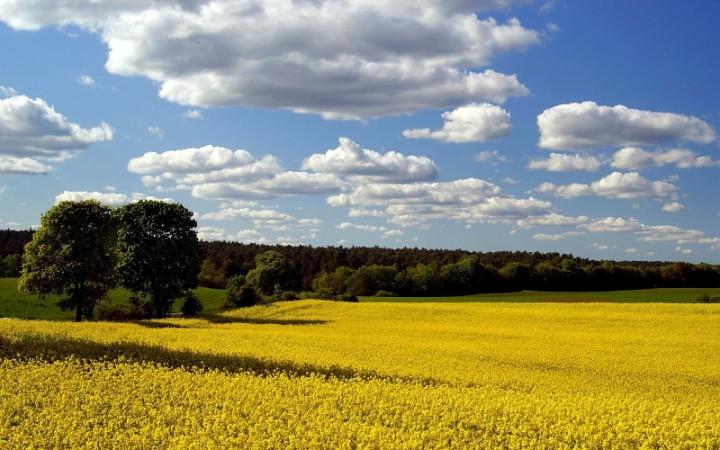clouds-landscapes-fields-blue-skies-1920x1200-wallpaper-577809