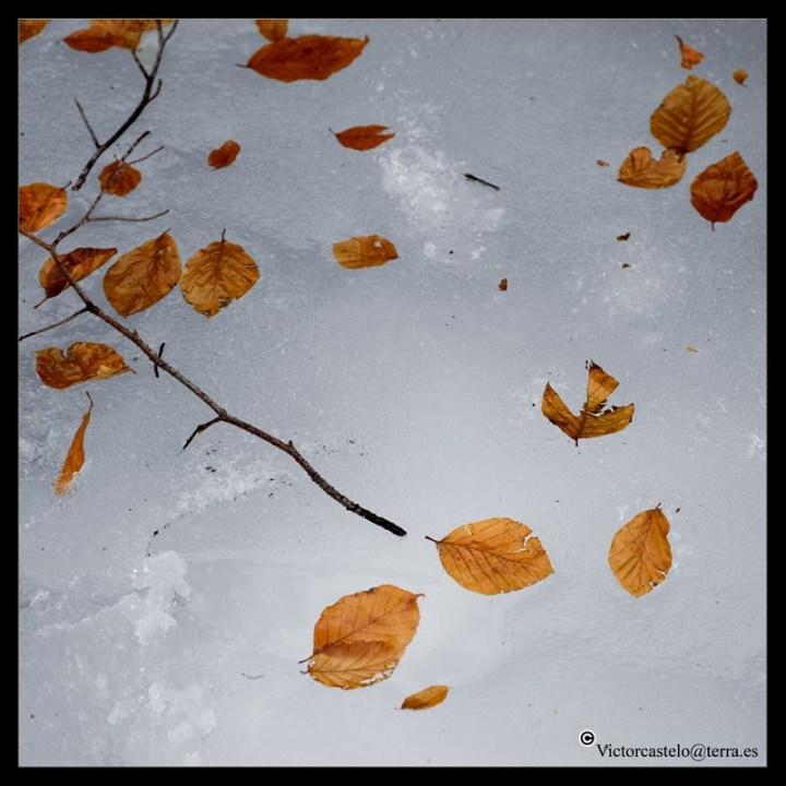 hojas-al-viento-05